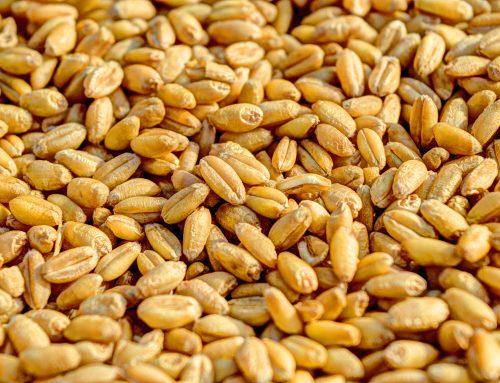 Céréales Légumineuses